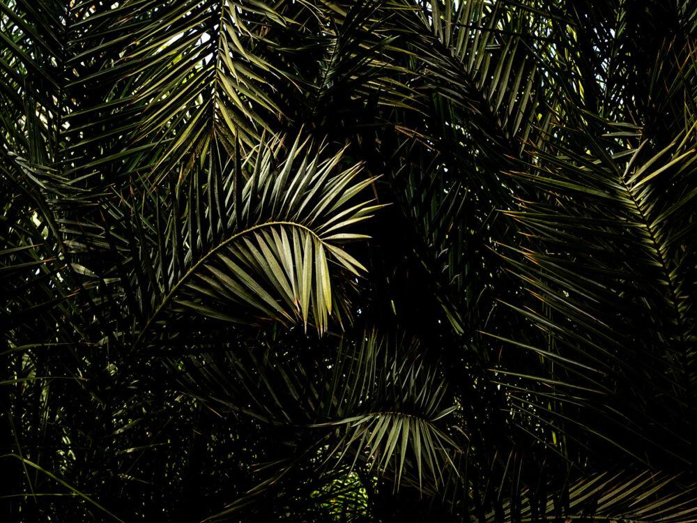 #palm #palmtrees #light #nature #marrakesh #beautiful #natural_light #leaves #photography